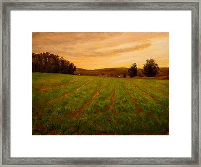 Furrowed Field Framed Print