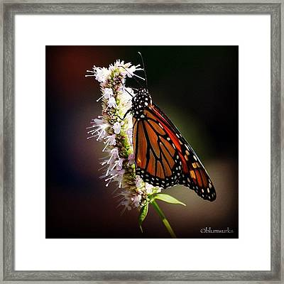 Further To Fly Framed Print