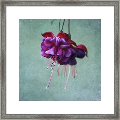 Fuschia Flower Framed Print by Kim Hojnacki