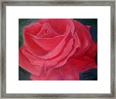 Fuschia Rose Framed Print
