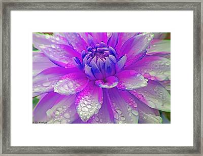 Fusia Flower Framed Print by Tyra  OBryant