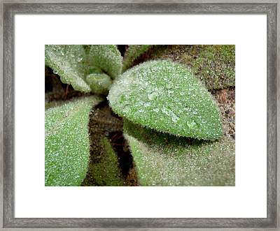Fuzzy And Wet Framed Print by Terry Eve Tanner
