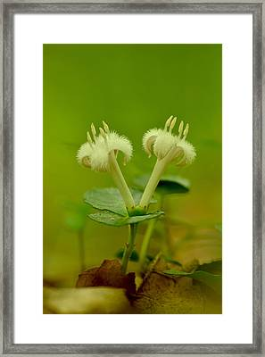 Framed Print featuring the photograph Fuzzy Blooms by JD Grimes