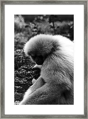 Fuzzy Monkey Framed Print by Elizabeth  Doran