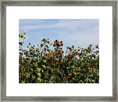 Framed Print featuring the photograph Gaillardia On Parade by Penny Hunt
