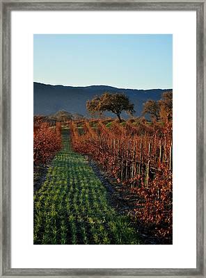 Gainey Vinyards Framed Print