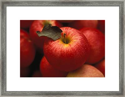 Gala Apples Framed Print by Lyle Leduc