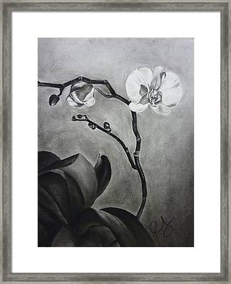 Galen's Orchid Framed Print by Estephy Sabin Figueroa