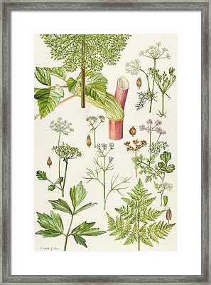 Garden Angelica And Other Plants  Framed Print by Elizabeth Rice