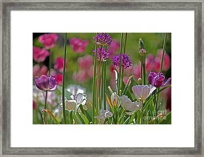 Garden Framed Print by Billie-Jo Miller