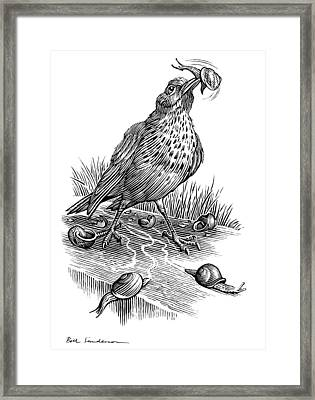 Garden Bird Catching Snails, Artwork Framed Print by Bill Sanderson