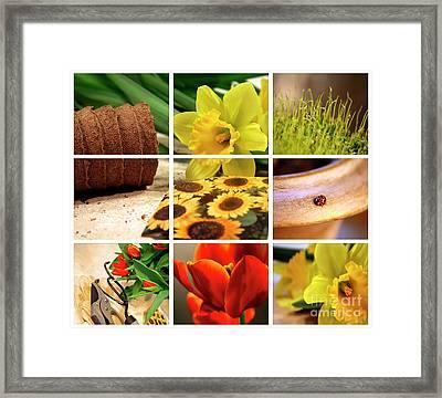 Garden Collage Framed Print by Sandra Cunningham
