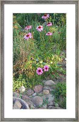 Garden Flowers And Rocks Framed Print by Thelma Harcum