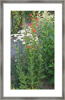 Garden Flowers Mix  In Nature Framed Print by Thelma Harcum
