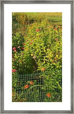 Garden Flowers Mixed Colors Framed Print by Thelma Harcum