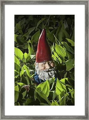 Garden Gnome No 0065 Framed Print by Randall Nyhof