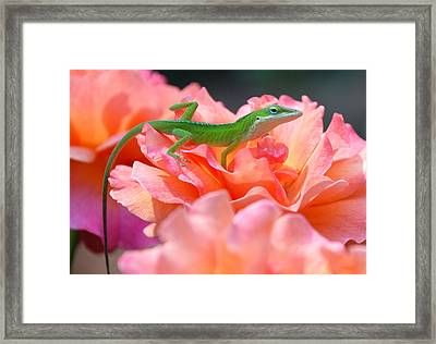 Framed Print featuring the photograph Garden by Kathy Gibbons