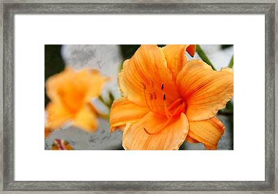 Framed Print featuring the photograph Garden Lily by Davandra Cribbie