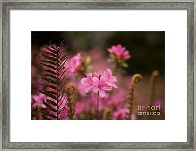 Garden Of Friends Framed Print by Mike Reid