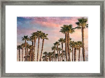 Garden Of Palms Framed Print by Stephen Warren