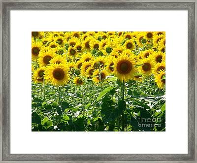 Garden Of Sunshine Framed Print