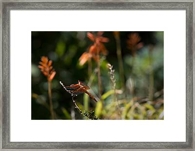 Framed Print featuring the photograph Garden Orange  by Priya Ghose