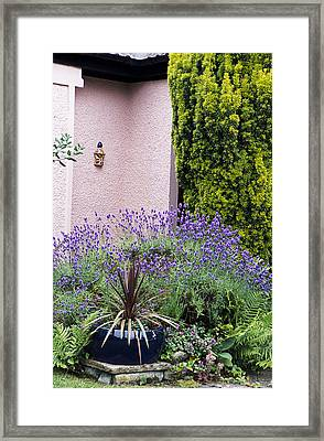 Garden Plants Framed Print by Archie Young