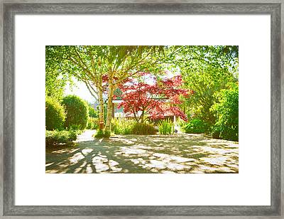 Garden Shade Framed Print by Tom Gowanlock