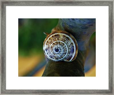 Framed Print featuring the photograph Garden Snail On Frangipani  by Werner Lehmann