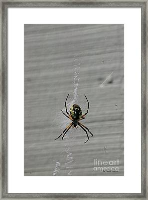 Framed Print featuring the photograph Garden Spider by Tannis  Baldwin
