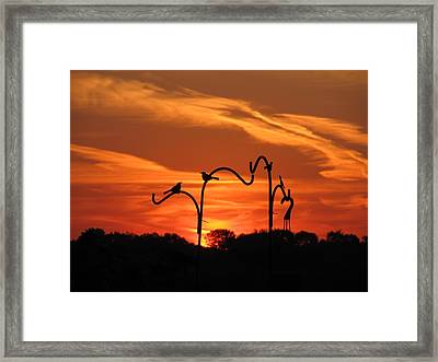 Framed Print featuring the photograph Garden Sunrise by Tina M Wenger