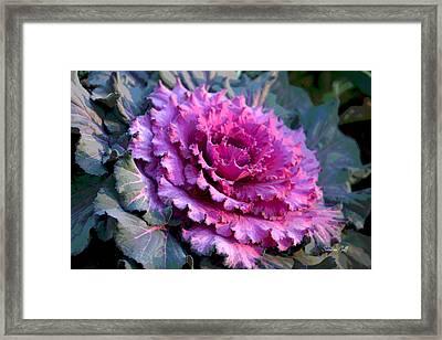 Garden Texture IIi Framed Print
