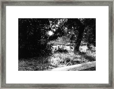 Garden Trees Framed Print by Luca Rosa