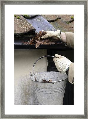Gardener Clearing Guttering Framed Print by Maxine Adcock
