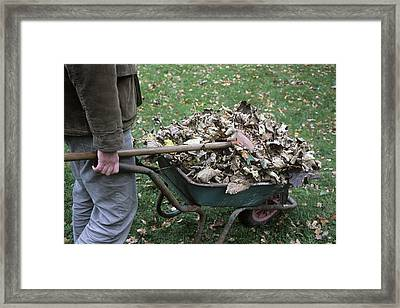 Gardener Pushing A Wheelbarrow Framed Print by Maxine Adcock