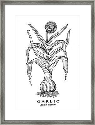 Garlic Botanical Framed Print