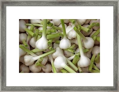 Garlic Bulbs Framed Print by Laurence Delderfield