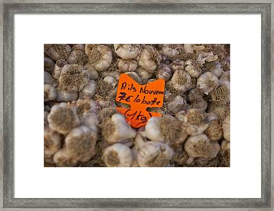 Garlic Framed Print by Georgia Fowler