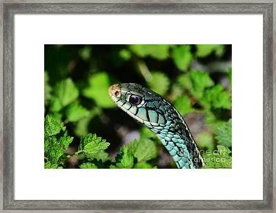 Garter Snake Profile Framed Print