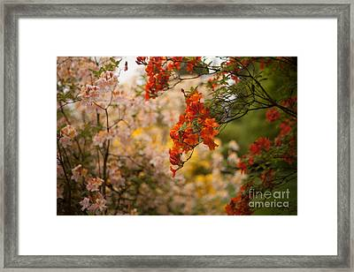 Gathering Of Radiance Framed Print by Mike Reid