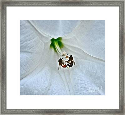 Gathering Pollen Framed Print by Marge Marino