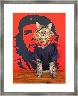 Gato Guevara Framed Print