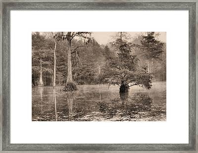 Gator Country Framed Print by JC Findley
