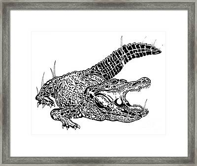 Gator Feed Framed Print by Jack Norton