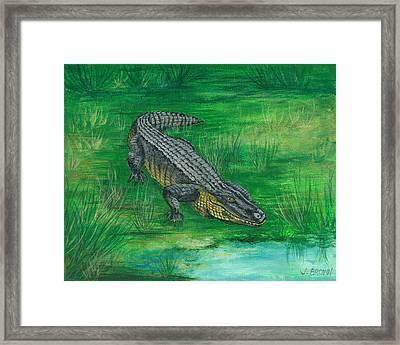 Gator Framed Print