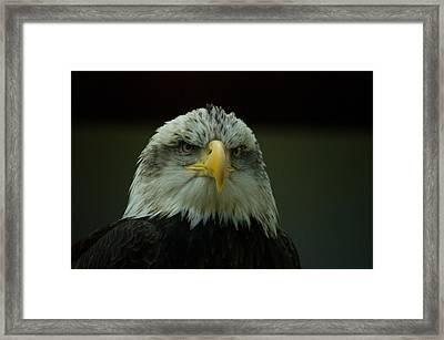 Gazing Thru Framed Print by Travis Crockart