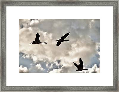 Geese Against The Sky Framed Print by Christopher Purcell