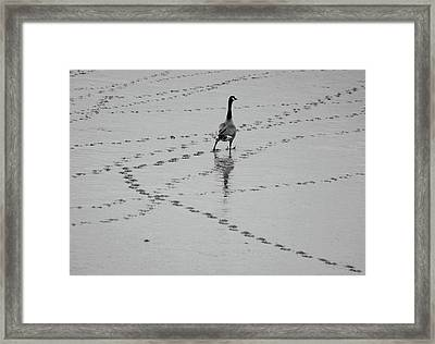 Geese Framed Print by All copyrights reserved by Harris Hui