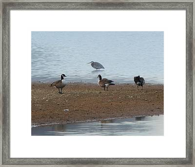 Geese And Heron Framed Print