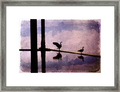 Geese At Dawn Framed Print